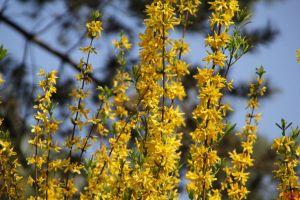 Blüten im Umland